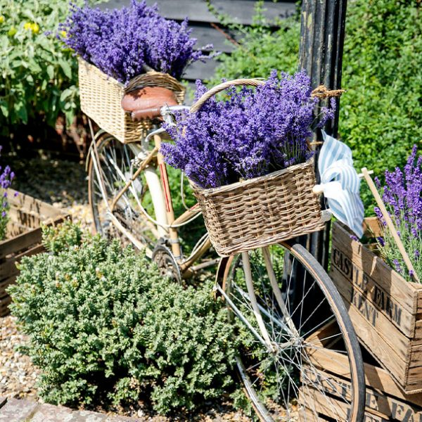 lavender Delivered